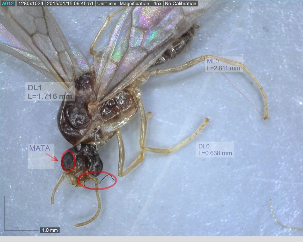 serangga.jpg